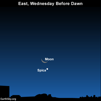 See the close pairing of the waning crescent moon and the star Spica before dawn on Wednesday, November 19.