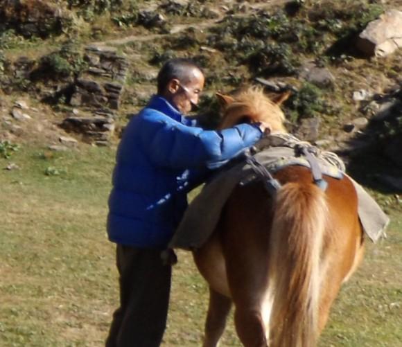 Sherab Lhundrub saddling a horse. Photo credit: Ben Orlove