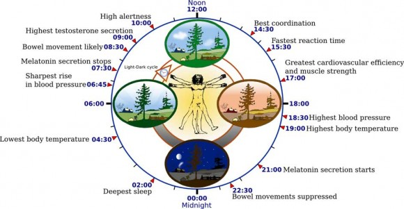 Cool facts about your biological clock