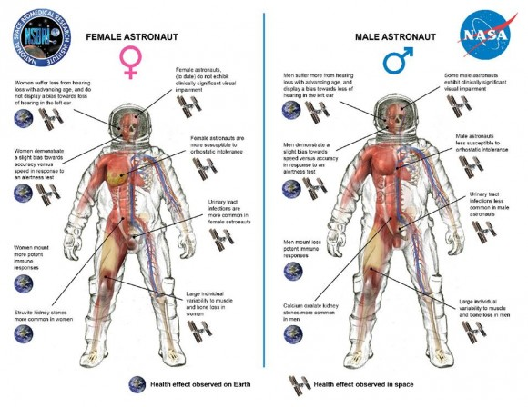 View larger | This diagram shows key differences between men and women in cardiovascular, immunologic, sensorimotor, musculoskeletal, and behavioral adaptations to human spaceflight. Image credit: NASA/NSBRI