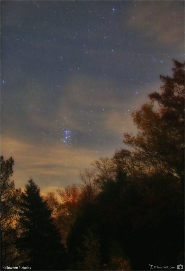 Glowing star cluster in slightly cloudy twilit sky above finely detailed trees.