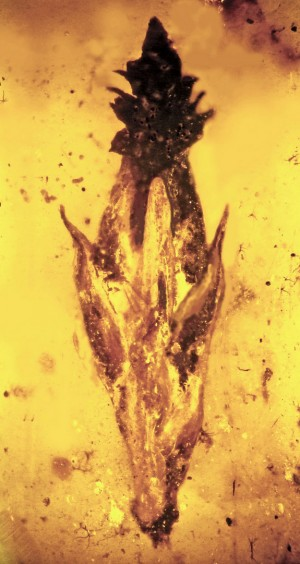 The oldest grass fossil ever found is about 100 million years old. Image credit: Oregon State University
