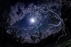 The little white dot near the moon here is Jupiter.  Photo by Masaaki Shibuya.