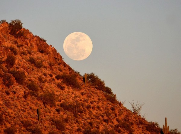 The moon looks full for several days around full moon.  William Vann caught this rising almost-full moon on March 4, 2015.