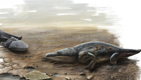 Toilet jaws: the scourge of people and dinosaurs 200m years ago. Image credit: University of Edinburgh