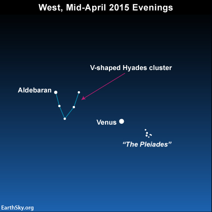 The dazzling planet swings closest to the Pleiades star cluster on or near April 11, and then sweeps most directly in between the Pleiades star cluster and the V-shaped Hyades star cluster around April 13.