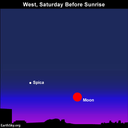 From the western half of North America, the short-lived total lunar eclipse sits low in the west before sunrise on Saturday,  April 4. Be sure to find an unobstructed western horizon. Click for an eclipse calculator.