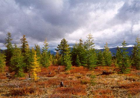 Kolyma region in the Siberian Arctic. Image Credit: Anatoly V. Lozhkin.