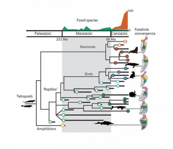 Family tree of marine tetrapods. Image credit: Smithsonian National Museum of Natural History