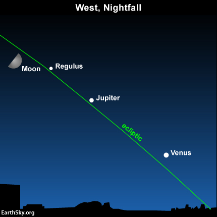 The moon and planets are always found on or near the ecliptic - Earth's orbital plane projected onto the dome of sky. By drawing an imaginary from Venus through Jupiter, you can locate the star Regulus throughout May and June 2015.