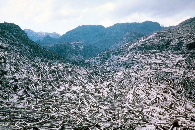 Daerah pegunungan yang ditutupi dengan batang pohon tumbang.