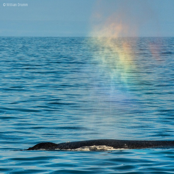 A whale at the ocean surface, with a cloud of rainbow-like light above.