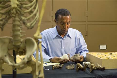 Yohannes Haile-Selassie at the Cleveland Museum of Natural History.