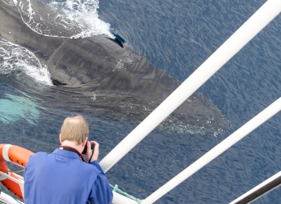 Kjell Rune Venaas captures a shot of a passing whale.