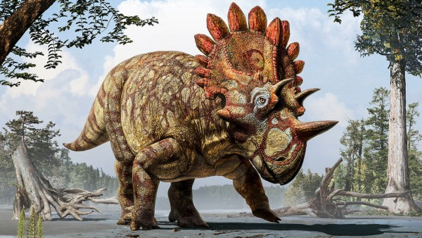 An artist's conception shows the horned dinosaur that scientists named Regaliceratops peterhewsi (and nicknamed