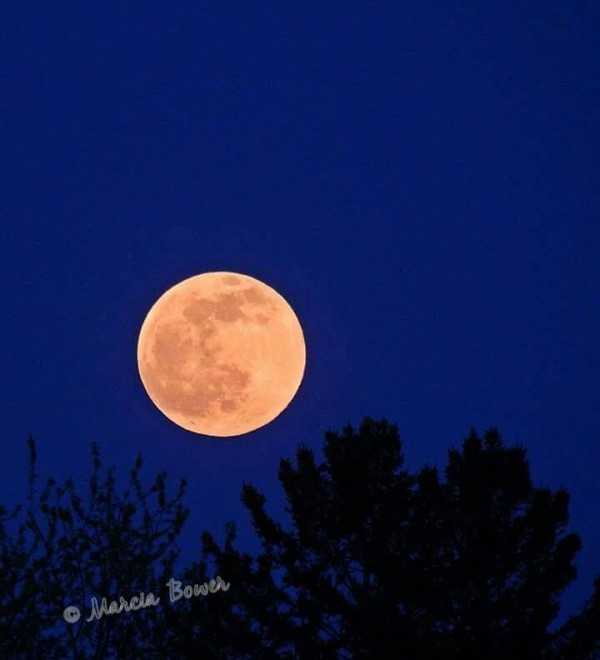 Full moon on June 2, 2015 from Marcia White Bower in Syracuse, New York.