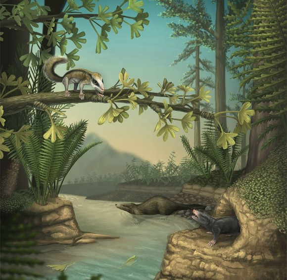 An illustration showing docodonts, now extinct mammals that saw an explosion of skeletal and dental changes (including the special molar teeth that give them their name), in the Middle Jurassic. Image: April Neander