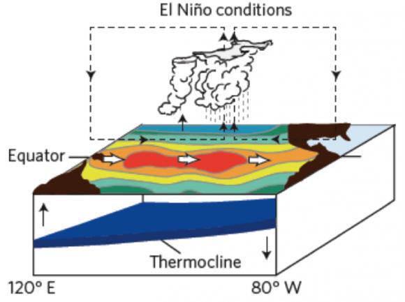 During an El Niño, the trade winds weaken and change ocean circulation patterns. Image credit: Michael McPhaden/NOAA