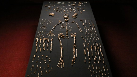 Pieces of a skeleton of Homo naledi, a newly discovered human species. Image credit: John Hawks/University of Wisconsin-Madison, via European Pressphoto Agency
