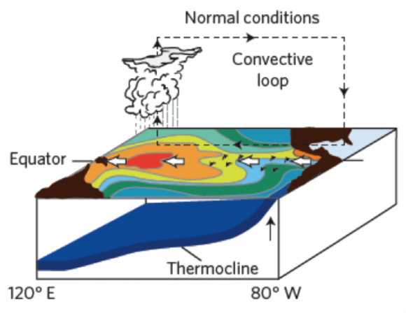 Under normal conditions, winds help carry warm water from east to west. Image credit: Michael McPhaden/NOAA
