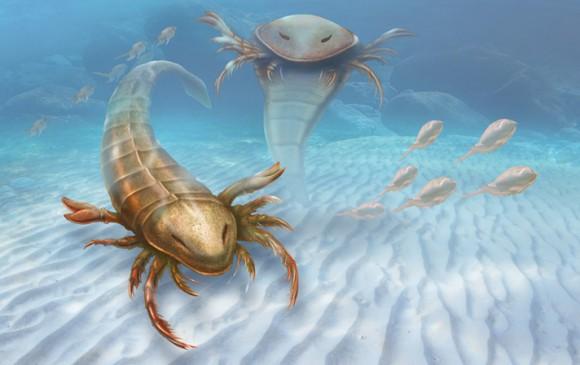 Giant sea scorpion was ancient sea predator