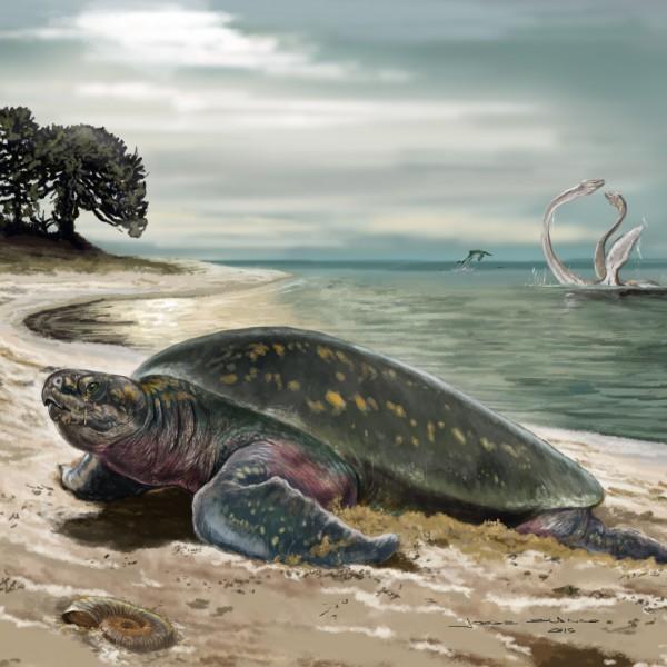 The sea turtle in its habitat, as it might have looked 120 million years ago.   © Jorge Blanco.  Via Senckenberg.