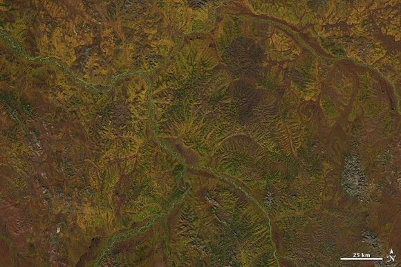 Fall colors in Siberia, from space