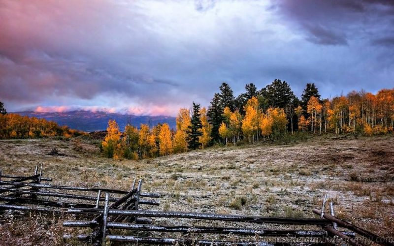 Yellow trees against evergreens under cloudy sky with rough zigzag rail fence in foreground.