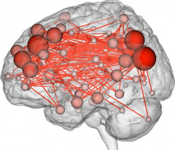 The functional connections in the brain that were most distinguishing of individuals. Many were between the prefrontal (left side of image) and parietal (right side of image) lobes. Image credit: Emily S Finn
