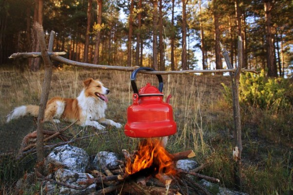 Dogs still know a good thing when they see it – warmth and food with people 'round the campfire. Photo credit: Image via www.shutterstock.com.