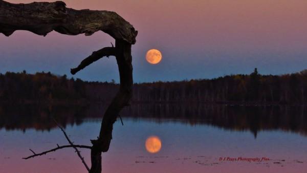 Hunter's Moon, taken by Donna Matthie Pray. October 26, 2015 at Mud Lake in DePeyster, New York