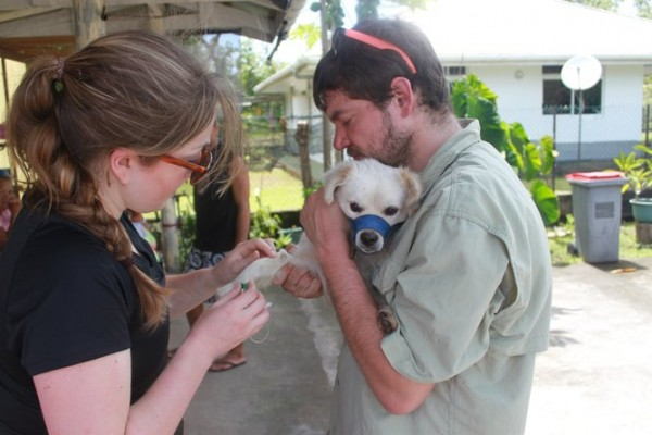 Team members sampling a village dog in the Pacific Islands. Photo credit: Adam Boyko