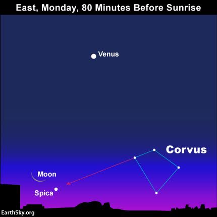 The moon near the star Spica before sunrise November 9.