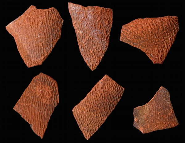 Eggshell fragments from a birdlike dinosaur that lived during the Late Cretaceous of China. Image via Kohei Tanaka via LiveScience
