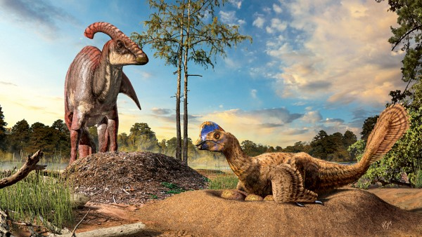 Artists concept of A duckbill dinosaur (left) next to its eggs buried in the ground, and a birdlike oviraptorid dinosaur (right) incubating its eggs in an open nest. Illustration by Julius Csotonyi via sciencemag.org