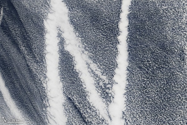 On March 4, 2009, the Moderate Resolution Imaging Spectroradiometer (MODIS) on the Terra satellite captured this image of ship tracks over the Pacific. Ship emissions contain small particles that cause the clouds to form. Image credit: NASA
