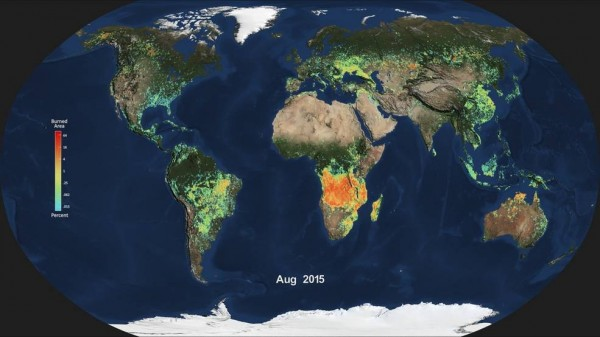 Shown here is the monthly average of global burned area for August 2015, produced from data from the Moderate Resolution Imaging Spectroradiometer (MODIS) aboard NASA's Aqua satellite. Light blue indicates a small percentage of burned area, while red and orange indicate high percentages of burned area. Image credit: NASA