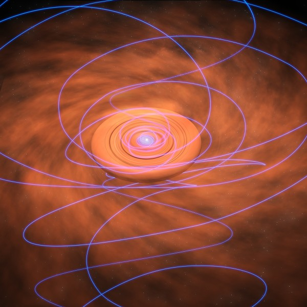 Artist's concept of magnetic field lines (purple) being twisted as they are dragged inward toward a swirling, dusty disk surrounding a young protostar. Image via Bill Saxton, NRAO/AUI/NSF.