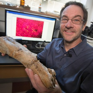 Gregory Erickson, a professor at the Florida State University, holds a leg bone from Eotrachadon in his lab in Tallahassee. Image credit: Bruce Palmer/Florida State University.