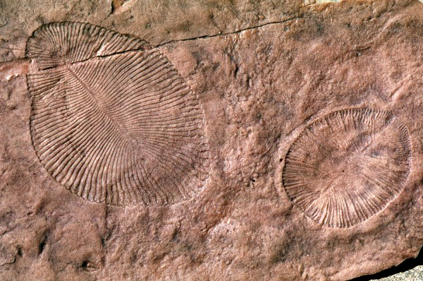Are these the only sorts of fossils we're likely to find on worlds orbiting distant suns?  long thought to be ancestors of early marine life are remnants of land-dwelling lichen or other microbial colonies. Image via University of Oregon.