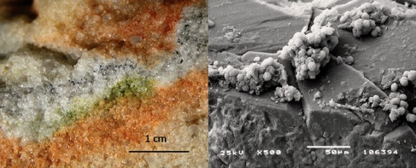 Section of rock colonised by cryptoendolithic microorganisms and the Cryomyces fungi in quartz crystals under an electron microscope.  Image credit: S. Onofri et al.