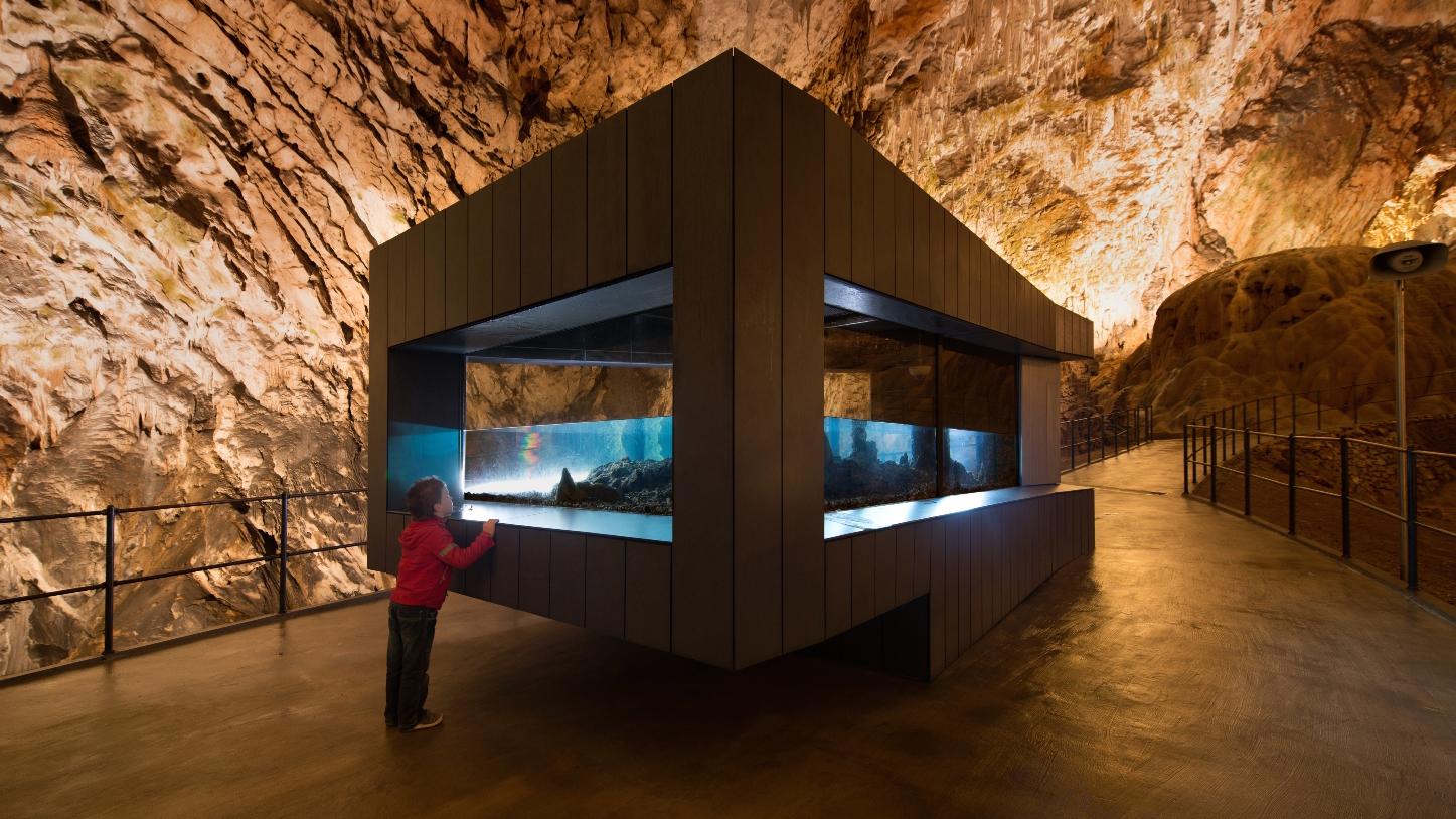 The aquarium at Postojna Cave holding a captive population of olm. Image credit: Postojna Cave Park.