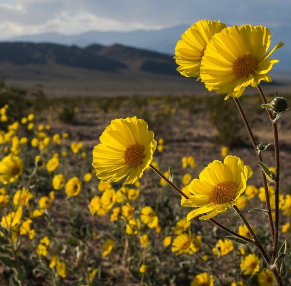 Photo credit: National Parks Service