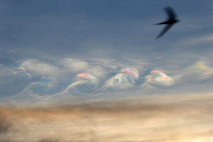 Iridescent Kelvin-Helmholtz clouds with passing swallow, Mutare, Zimbabwe Photo taken March 11, 2016 by Peter Lowenstein.