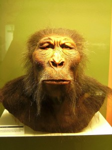 Paranthropus boisei reconstruction at Westfälisches Museum für Archäologie, Herne, Germany. Photo by User:Lillyundfreya via Wikimedia Commons.