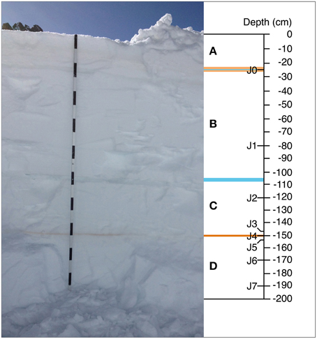 Section of one vertical snow profile sampled at Jungfraujoch. Image:  Meola M, Lazzaro A and Zeyer J