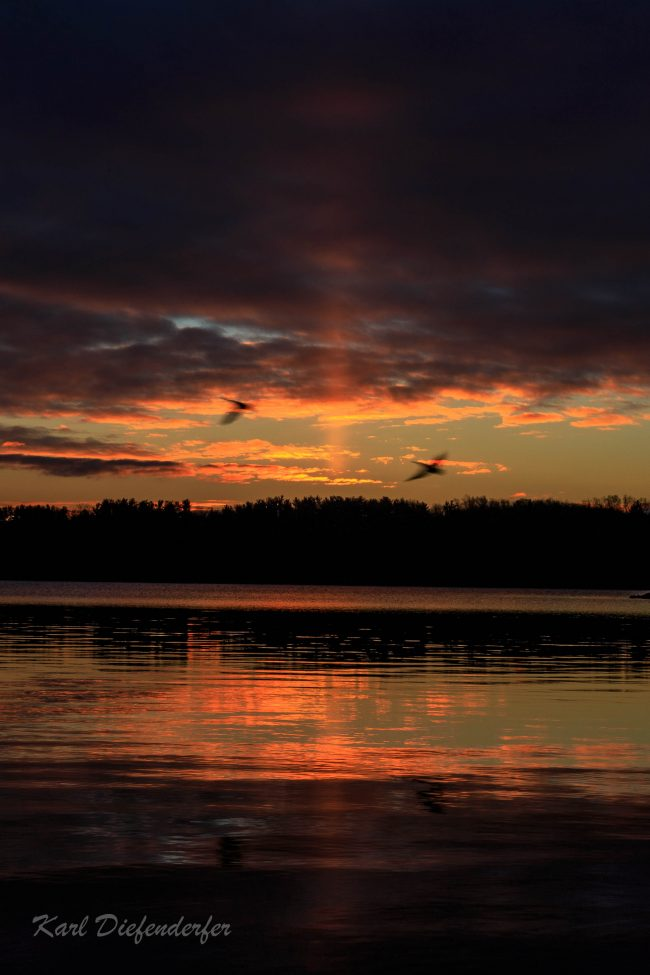 Two big, blurry birds flying under orange sunset clouds with light pillar in background over a lake.