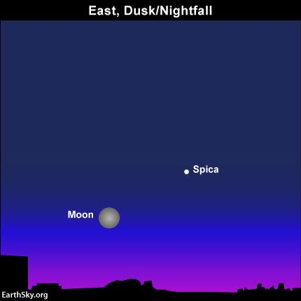 The full moon is out all night long, from dusk April 21 till dawn April 22. That's not good news for this year's Lyrid meteor shower, which is expected to produce the greatest number of Lyrids in the predawn hours on April 22, 2016.