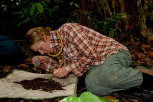 Hannah Wood studying spiders in the Philippines during a different research expedition. Image credit: Stephanie Stone.