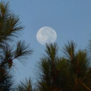 Daytime moon.